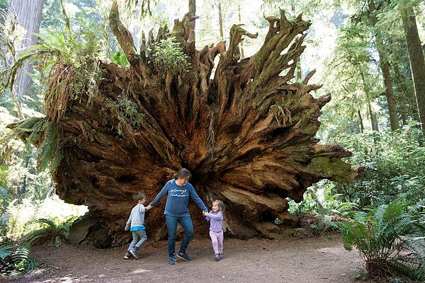 family-by-huge-redwood-tree