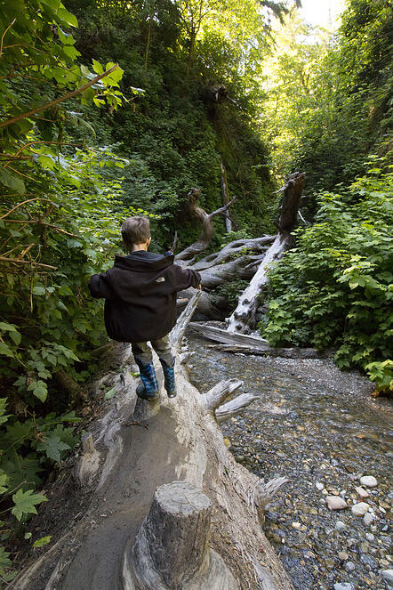little-boy-in-fern-canyon