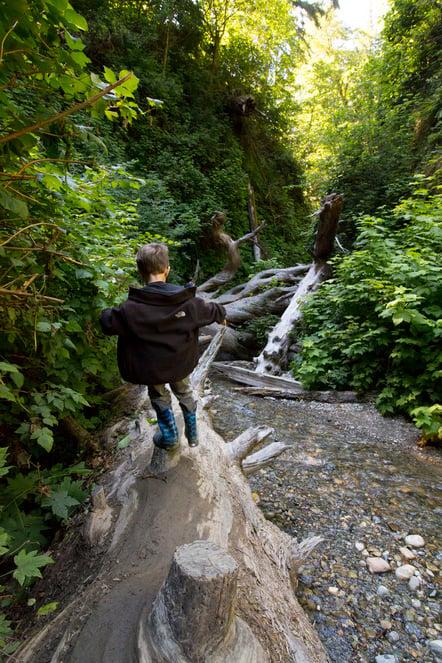 little-boy-in-fern-canyon